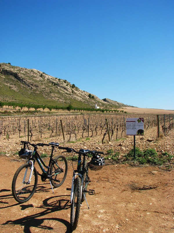 En bici por los viñedos