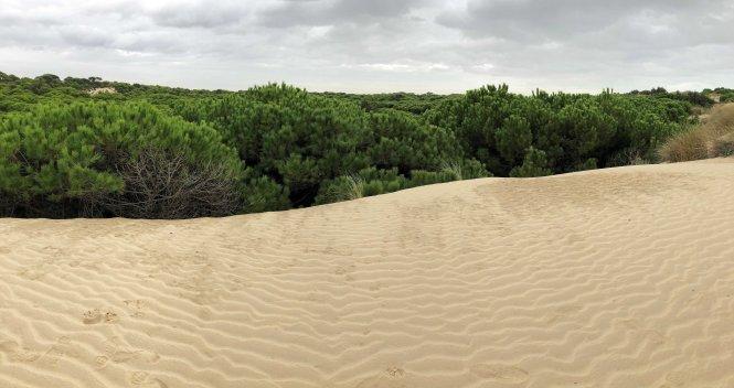 Paisaje dunar en Doána
