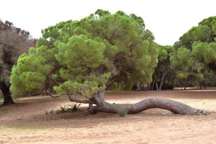 Doñana