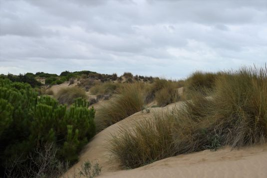 Doñana dunas